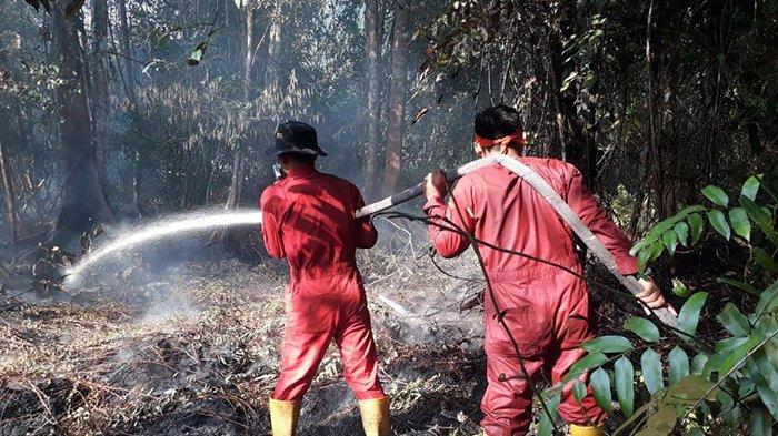 Api Menyala di Akar Rizhophora,Areal Penggunaan Lain di Teluk Lanus Terbakar, Ini Kesulitan Damkar
