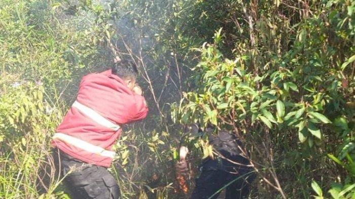 Kebakaran Lahan di Kampar Kembali Terjadi, Api di 3 Ha Sawit dan Karet Padam dengan Libasan Ranting