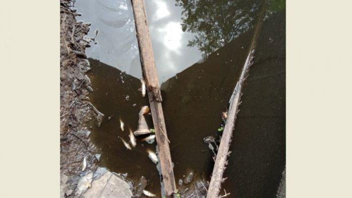Tanggul Limbah Pabrik Sawit di Kampar Jebol, Kompensasi kepada Masyarakat Belum Tuntas