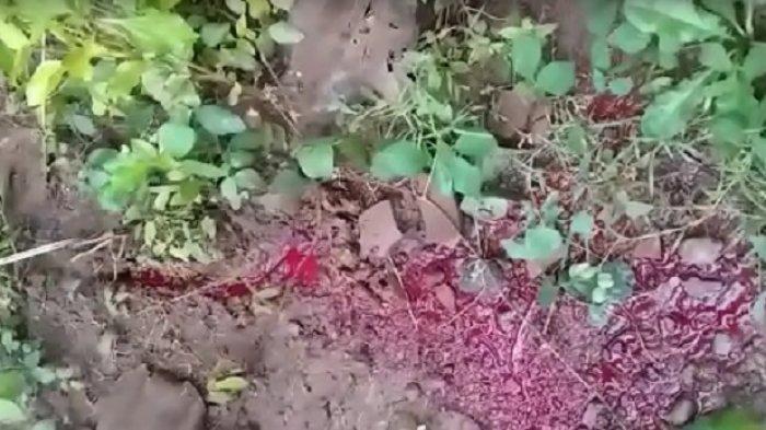Kejadian ini menyita perhatian warga berupa tanah mengeluarkan cairan merah mirip darah segar di tanah milik Waluyo, di Dukuh Sentul RT 3 RW 5, Desa Pundungrejo, Kecamatan Tawangsari, Kabupaten Sukoharjo, Rabu (3/3/2021).