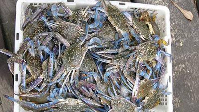 Nelayan Lampung Timur Berharap Tangkapan Kepiting Rajungan Melimpah pada Januari Nanti
