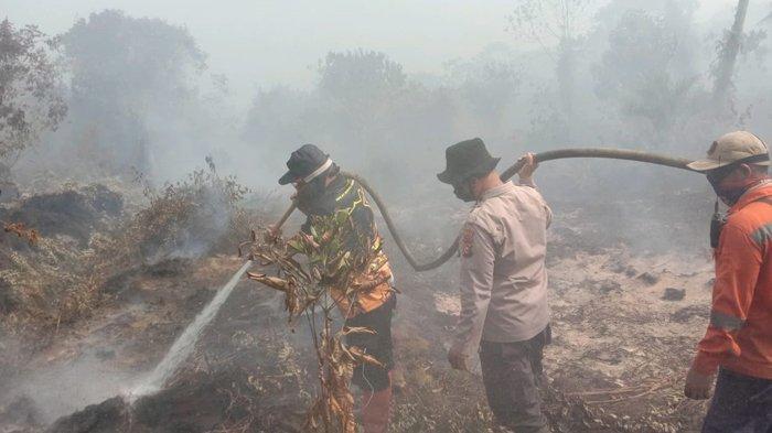 Kuala Kampar Membara karena Karhutla di Riau, Api Lalap Kebun Kelapa, Asap Tebal Warnai Pemadaman