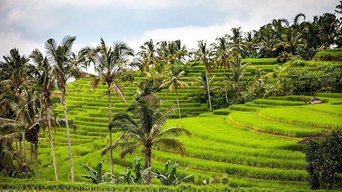 Lengkap, Deretan Lagu Daerah Seluruh Indonesia, Lagu Jawa, Minang, Batak, Papua sampai Sunda