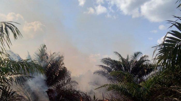 Di Luar Izin Lokasi, 5.300 Ha Pelepasan Kawasan PT DSI Diusulkan Jadi TORA