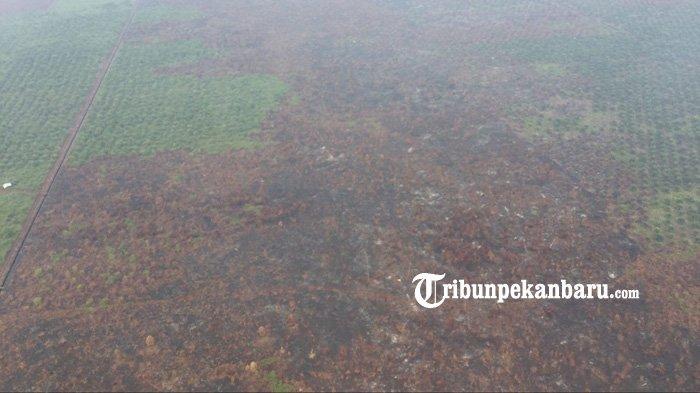 Begini Gambaran Lahan Gambut yang Terbakar di Lubuk Gaung