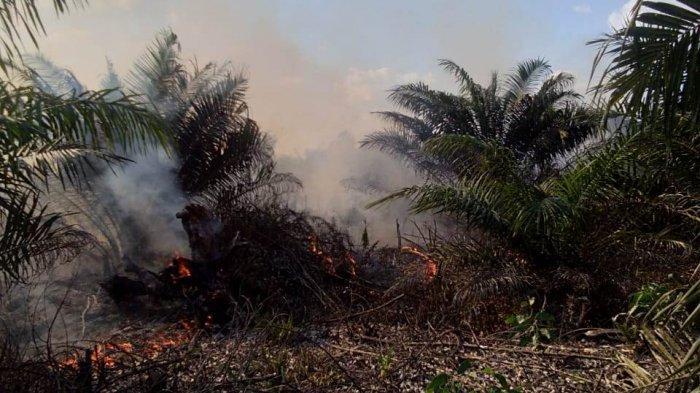 Lahan Sawit PT DSI di Siak Kembali Terbakar, Jenis Kebakarannya Atas dan Bawah