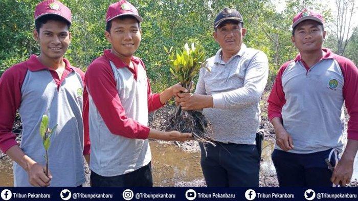 Lestarikan Lingkungan, Mahasiswa Kukerta Tematik Universitas Riau Melakukan Penanaman Mangrove