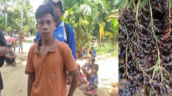 Kisah Warsi Bina Masyarakat Talang Mamak di TNBT Tanam Jernang, Lestarikan Hutan