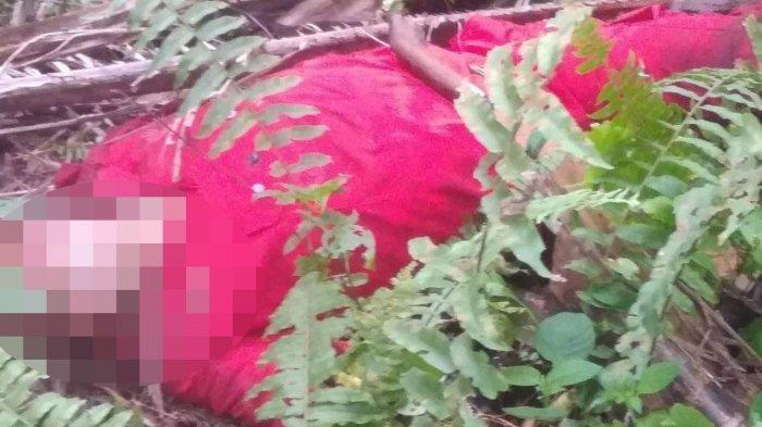 Mandor Kebun di Pelalawan Tewas Dibunuh Anggotanya, Pelaku Ditangkap di Kuansing