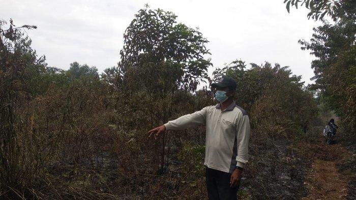 Karhutla di Riau, 1 Ha Lahan Gambut Terbakar di Desa Pulau Muda Pelalawan, MPA Langsung Bergerak