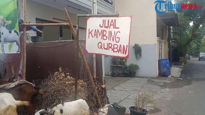 Omset pedagang hewan kurban di masa Pemberlakuan Pembatasan Kegiatan Masyarakat (PPKM) Darurat Jawa-Bali menurun signifikan.