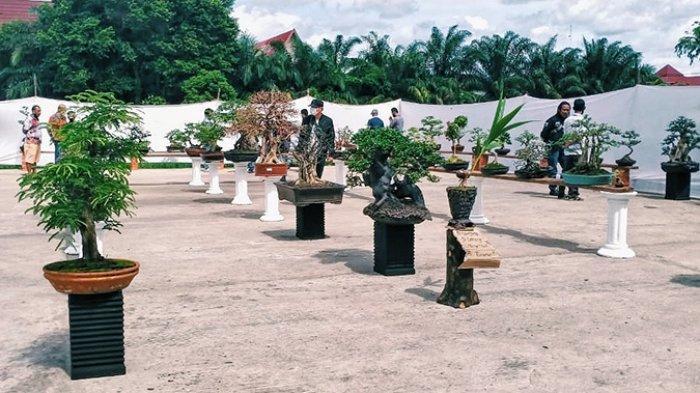 50 Tanaman Bonsai Dipamerkan Pecinta Bonsai Inhil Dalam Pameran di Tembilahan