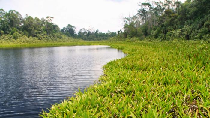 Mandi Safar di Tasik Nambus Gagal Masuk Kategori Anugerah Pariwisata 2021 di Riau