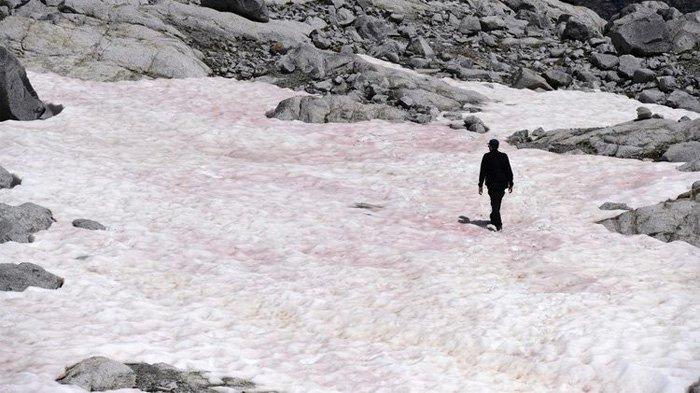 Salju di Gunung Ini Mendadak Jadi Merah Muda, Di Tempat Lain Berwarna Hijau, Apa Penyebabnya?