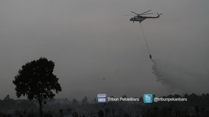 BRG Sebut Tahun Ini Restorasi Gambut di Riau 170 ribu Hektar