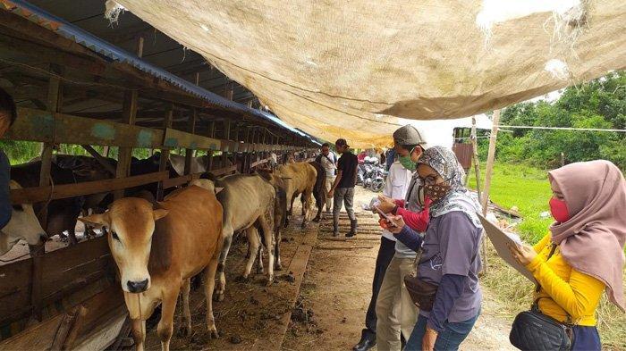 Muda Kaya Raya, Siapa Pengusaha Yang Sumbangkan Hewan Kurban 1100 Ekor Sapi ke 476 Wilayah Indonesia