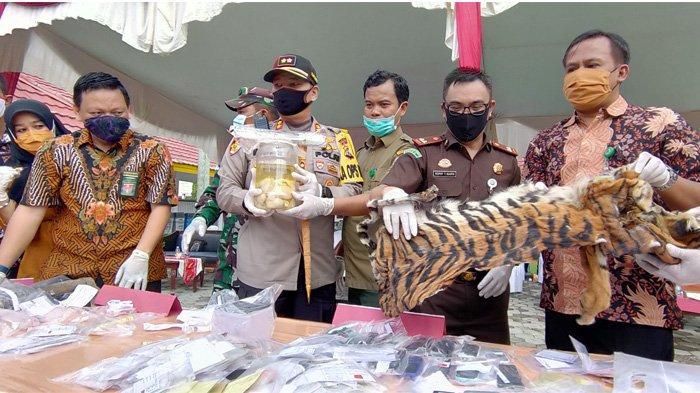 4 Janin & Selembar Kulit Harimau Sumatera Dibakar, Kejari Pelalawan Musnahkan Barang Bukti Perkara
