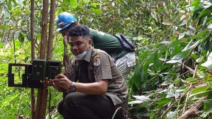 Penemuan Jejak Harimau Sumatera diPelalawan,Tim BKSDA Pasang 2 Kamera Trap di Kebun PT Gandaerah