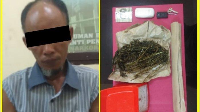 Tunggu Pembeli, Pengedar Ganja di Rohul Riau Diringkus Polisi