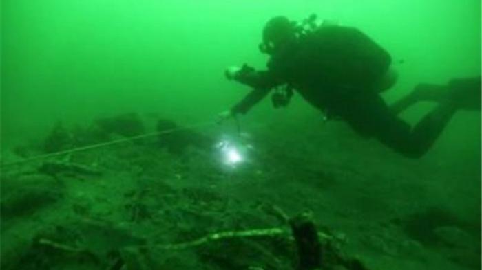 ManusiaTerlindung dari Puluhan Juta Virus di Lautan karena Peran Mahluk-mahluk Laut Ini