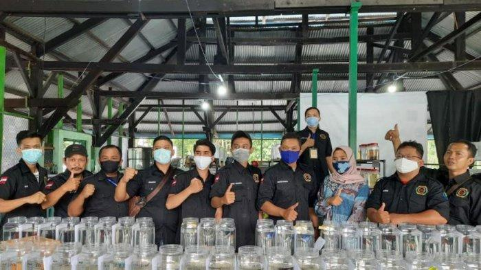 Kontes Ikan Cupang Hias Liga Sumatera