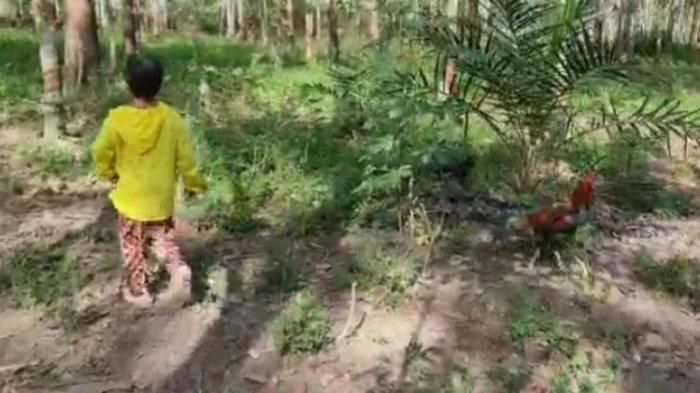Penyiksaan Anak di Kuansing, Kronologi Bocah 11 Tahun Lolos dan Laporkan Tante yang Bunuh Kakaknya
