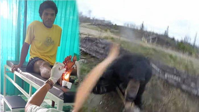 Sapri Gantikan Posisi Istri dan Anak Saat Dikejar Beruang di Rohul Riau, Kini Masih Takut ke Ladang