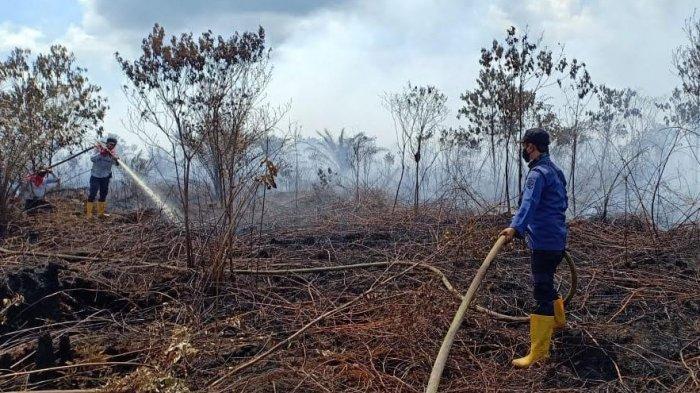Karhutla Riau, Tim Gabungan Buru Api Tersisa di Tunggul Kayu Kampung Temusai