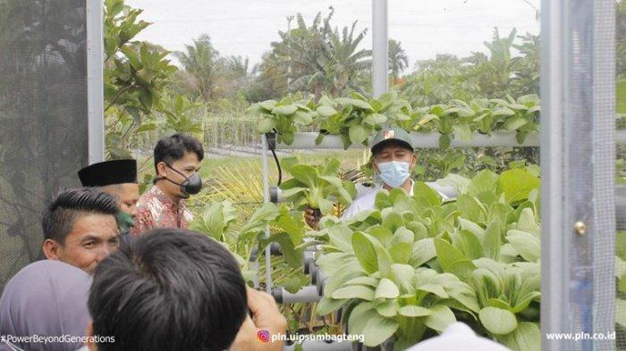 PLN Peduli, Panen Pertama Program Pemberdayaan Ekonomi Ketahanan Pangan Hidroponik