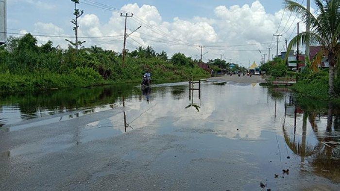 Warga Rohil Riau Tanam Pohon Pisang di Tengah Jalan, Kenapa? Ternyata Tujuannya Mulia