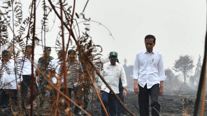 Melihat Luas Lahan yang Terbakar di Desa Merbau Pelalawan Riau, Presiden Jokowi: Ini Terorganisasi