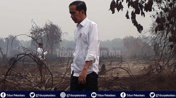 Jokowi Duga Ada Unsur Kesengajaan Terkait Karhutla, Polisi Curiga Kebakaran Padam Bisa Muncul Lagi