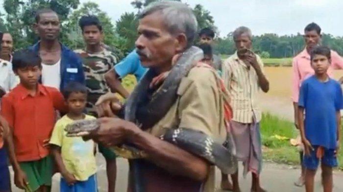 Pria Tua Diantar King Kobra ke Liang Lahat, Padahal Sebelumnya Sok-sokan Pamer Baru Ditangkap