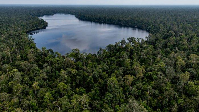 Program RER PT RAPP Catat Kemajuan Dalam Memperbaiki Hutan Rawa Gambut Utuh Terbesar di Sumatera