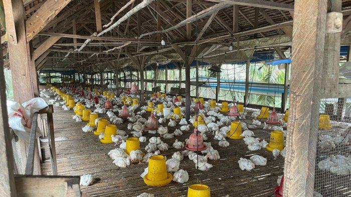 Program BEST4Life, Kemudahan Layanan PLN Pekanbaru Untuk Pelaku Usaha Sektor Agrikultur