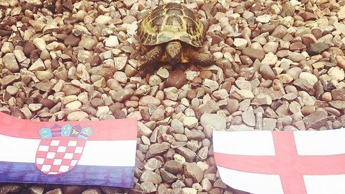 Inggris VS Kroasia Piala Dunia 2018, Ini Ramalan Roger Si Kura-kura