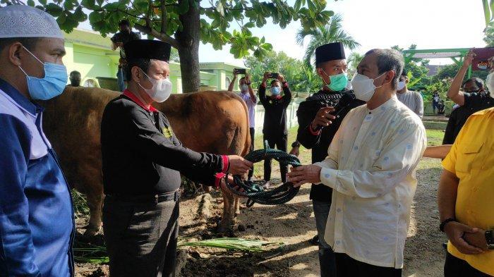 Sapi Jokowi Berbobot 889 Kg Dipotong Hari Ini di Masjid Annur, Gubernur Riau Doakan Presiden Sehat