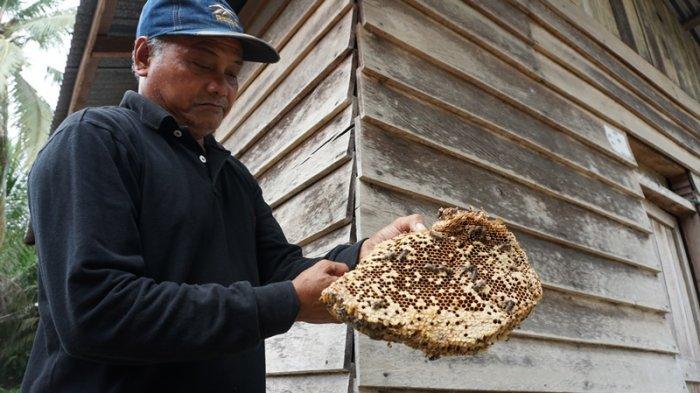 Tradisi Menumbai Madu Sialang di Kabupaten Pelalawan, Mengungkap Sosok Juragan Tua dan Mantra Gaib