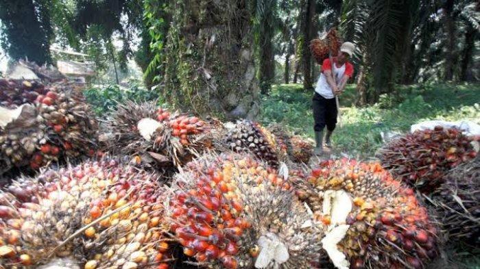 MELEJIT, Ekspor Non Migas Riau Alami Kenaikan Hingga 61,98 Persen