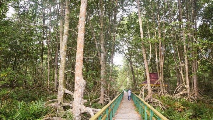 Sensasi Berjalan di Kawasan Ekowisata Pantai Solop, Didukung Tracking Kering 1.500 Meter