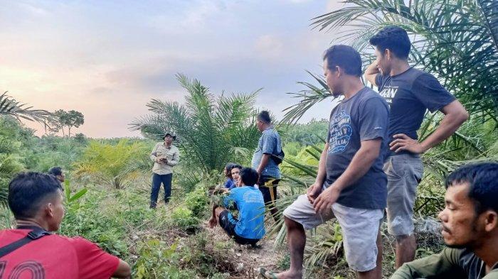 Sepekan Lalu-lalang di Kebun Warga Pelalawan, Tim BKSDA Berhasil Giring Gajah Liar Kembali ke Hutan