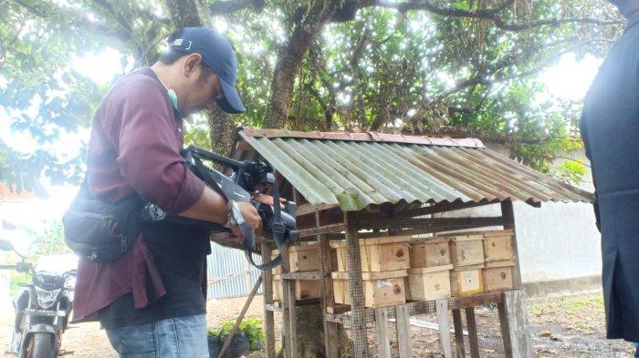 Tertarik Coba Budidaya Lebah Klanceng di Pekanbaru? MBM Jalin Pola Kemitraan, Bagaimana Caranya?