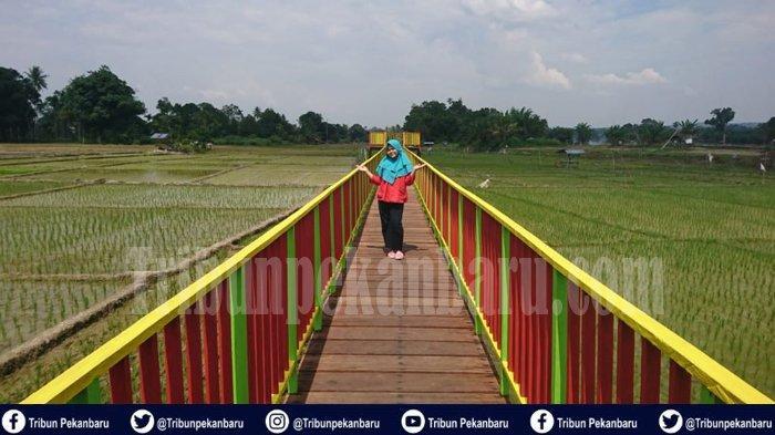 Baru Buka Tiga Hari Raup Rp 3 Juta, Tawarkan Landscape Sawah di Desa Rokan Koto Ruang, Rohul Riau