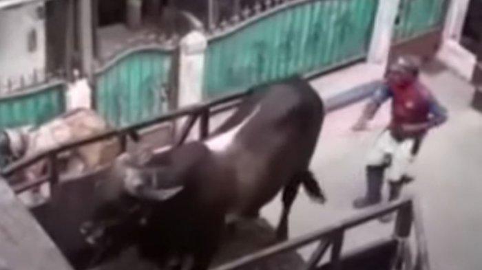 Tangkapan layar video viral sapi kurban lepas di Jalan Kebon Bawang II, Kelurahan Kebon Bawang, Tanjung Priok, Jakarta Utara