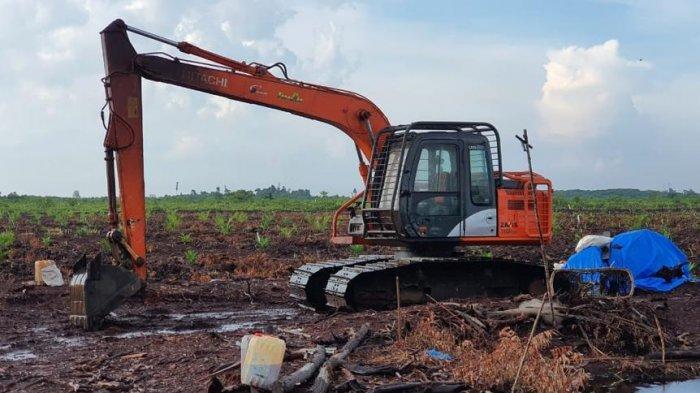 Warga Buka Kebun Sawit 60 Hektare di Kawasan Hutan di Bengkalis Riau, Akhirnya Ditangkap Polisi