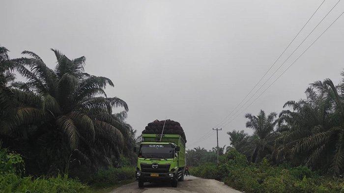 Miris,Riau Tak Dapat Bagian dari Dana Bagi Hasil Kelapa Sawit,Tapi Jalan Rusak Dilewati Truk Sawit