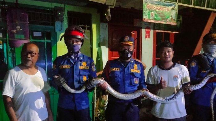 Ular sanca sepanjang 3 meter berada di rumah warga di Jalan Slamet Riyadi, Kelurahan Kebon Manggi, Kecamatan Matraman, Jakarta Timur pada Rabu (15/9/2021).