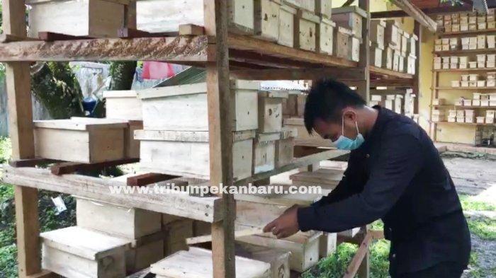 FOTO: Ternak Lebah di Pekanbaru - usaha-ternak-lebah-klanceng-di-jalan-muhajirin-pekanbaru-1.jpg