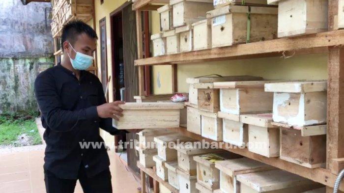 FOTO: Ternak Lebah di Pekanbaru - usaha-ternak-lebah-klanceng-di-jalan-muhajirin-pekanbaru-3.jpg