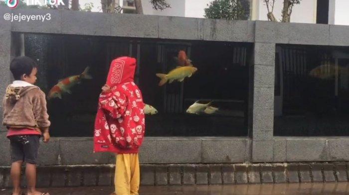 Video yang memperlihatkan pagar rumah yang dijadikan Kolam Ikan Koi viral di media sosial.